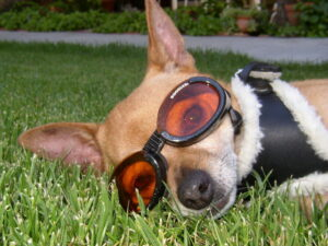 Summer protection with goggles